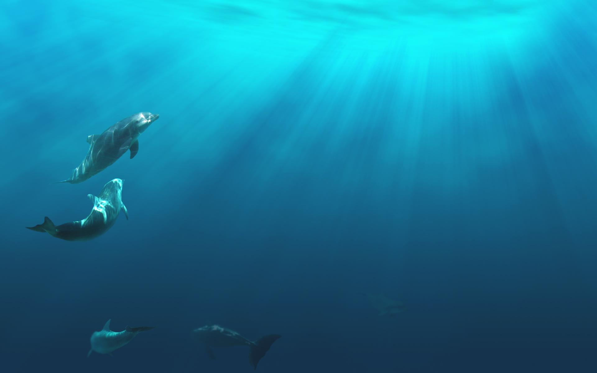 best-underwater-hd-wallpapersFABF45AC-83BD-0C28-5289-5CCB8791041A.jpg