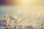 867762-blurred-grass-nature18E2DCCB-859B-FD9F-B2E3-6CF3B72FD22F.jpg
