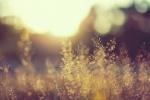 grass-background-blur-shadowA9389E8A-5734-7985-E26D-E470BD42894F.jpg