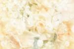 wedding-background-736b09024-f46b-a746-f768-0ff3120de508-1001x626845D232F-E2E4-2DC9-5EBB-00B8BEABDD2D.jpg